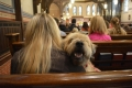 blessing-of-the-animals-2016-16